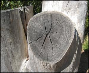 challenge1_round_tree_trunk_border
