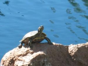 challenge1_turtle